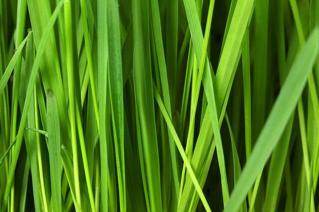 Frühling – Zeit für den Rasen und die Rasenpflege